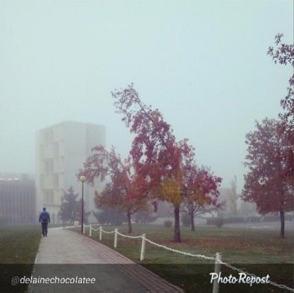 niebla unav issa